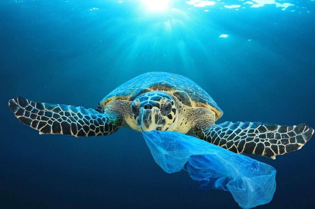 What is a suitable Plastic Wrap Alternative?
