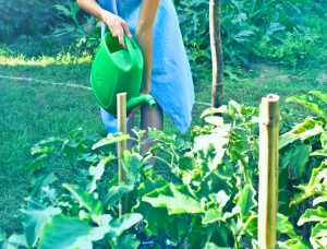 ecostore - DIY Bokashi Compost Tea