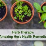 Herb Therapy: 5 Amazing Herb Health Remedies!
