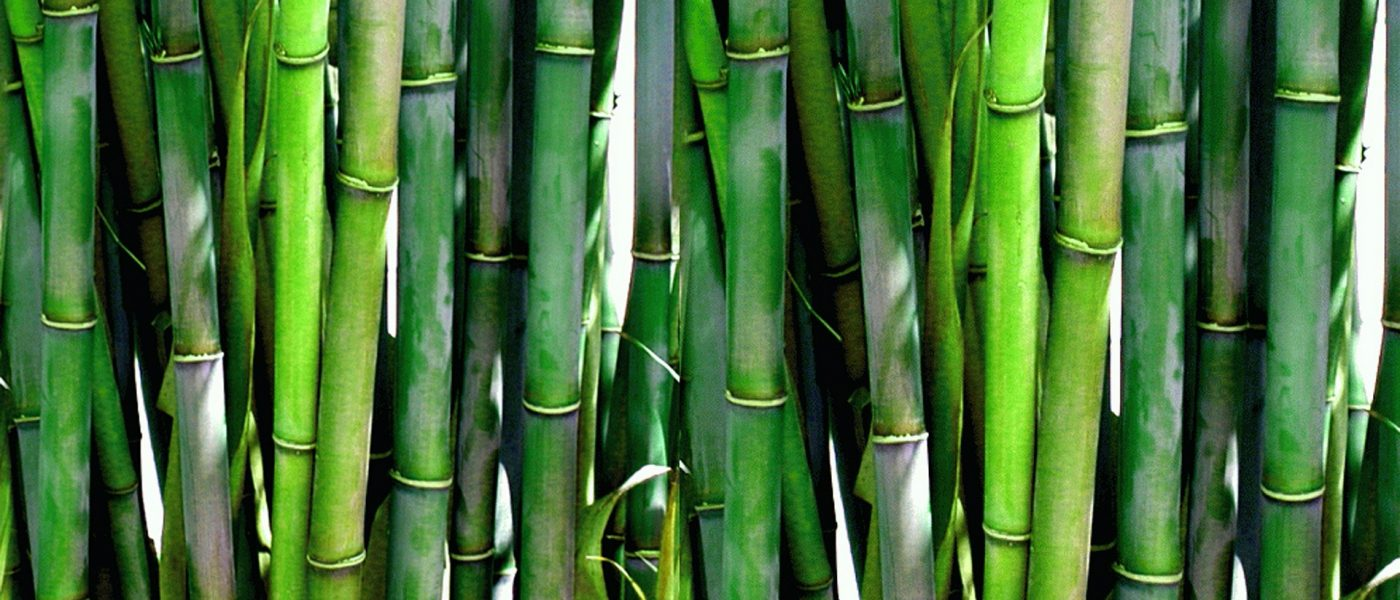 Find out what Bamboo can do for you!