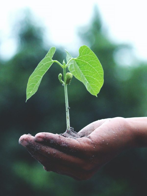 Green Friday – For Every Order, We'll Plant One Tree!