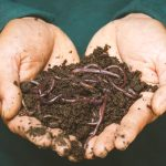 Using a Wormery to Compost Kitchen Waste