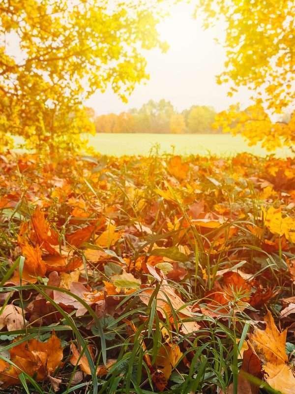 Eco-friendly October